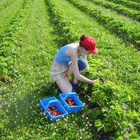 Сбор урожая в Польше